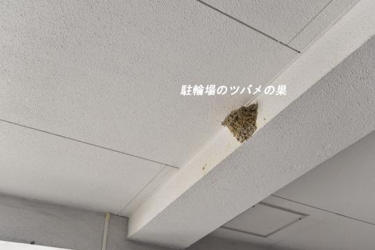 ユーハウス第二刈谷のツバメの巣です。