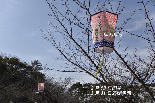 亀城公園のぼんぼりです。