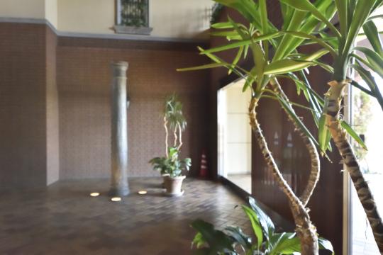 エルグランデ刈谷イーストウイングの植木鉢。