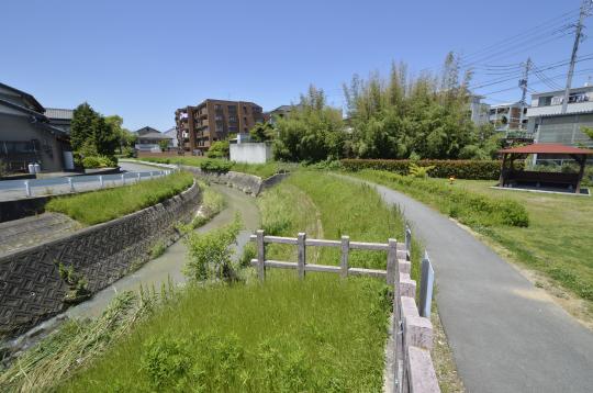 新緑の季節 公園