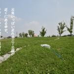 東浦町の三丁公園の芝生